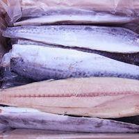 サゴシ〔サワラ〕フィーレ 4kg(15枚)のサムネイル