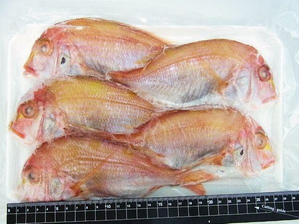 ★焼き鯛用に鱗内臓処理済★長崎産連子鯛(5尾)