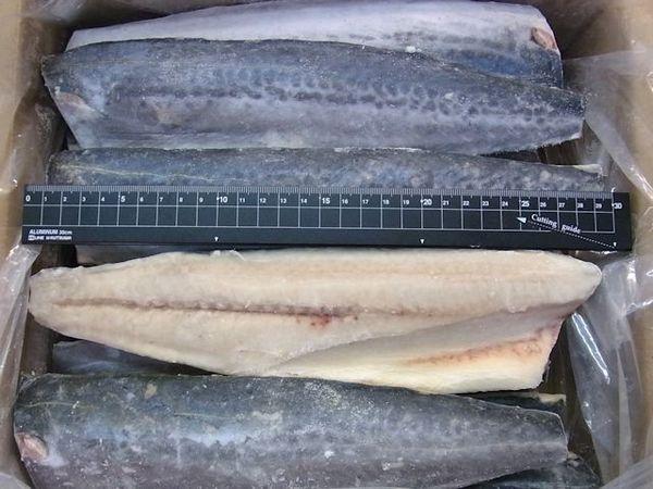サゴシ〔サワラ〕フィーレ 4kg(20枚)