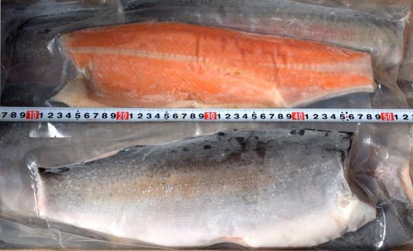 【売切れ】定塩 トラウトフィーレ 8kg/13枚
