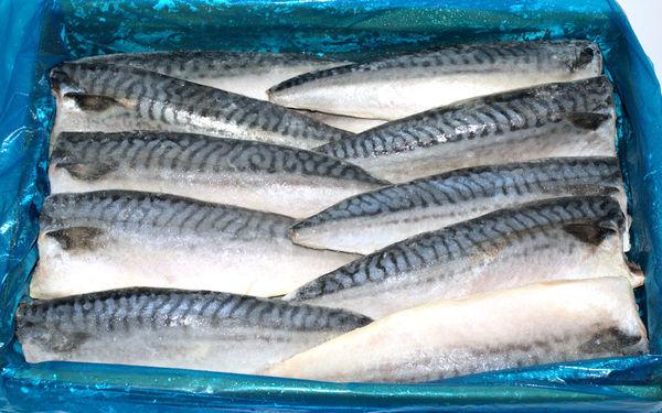 ノルウェー産 真鯖フィーレ 5kg/30枚(約1枚165g)※腹骨取り